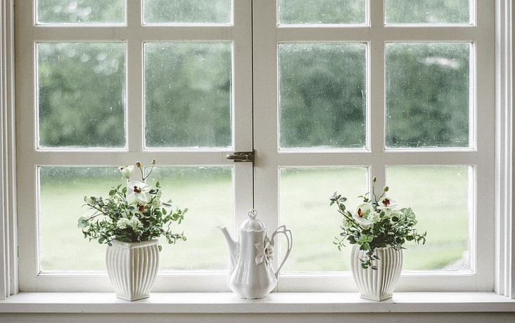 window and plants